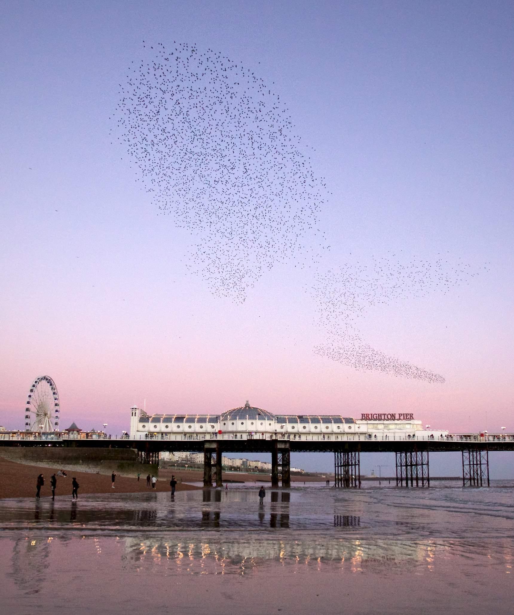 Brighton Starlings