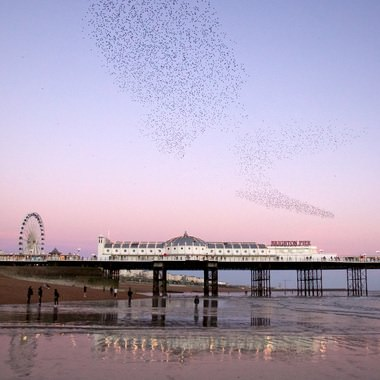 Brighton Starlings