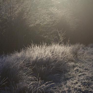 Frosty glow