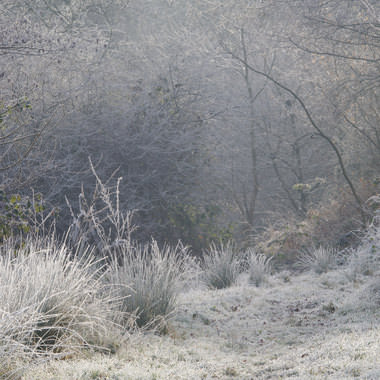 Frosty Lindfield